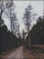 Bei den Birken
